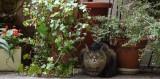 Rocky sitting under the fuchsia plant