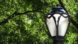 Central Park Lamp Post