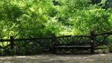 Central Park Shakespeare Garden Bench