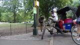 No Pedicab Parking