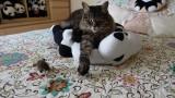 Rocky on Mr Panda