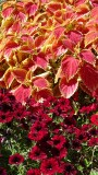United States Botanic Garden Flora
