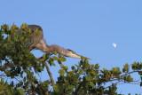 herons_egrets_wood_storks_spoonbills