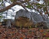 gators_and_misc_creatures