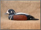 Arlequin plongeur ( Harlequin Duck )