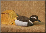 Harelde Kakawi ( Long-tailed Duck )