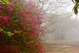 Boug in the mist.jpg