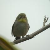 Salalah bird2.jpg