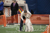 LEAP AKC Agility March 2014
