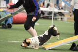 Sunday Novice FAST LEAP Agility May 2014
