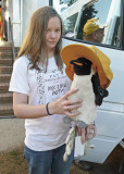 MY GRANDDAUGHTER DECIDED TO TAKE HER FAVORITE PENGUIN, BERNARD, TO THE WORKSITE