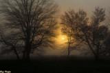 Morning Sun Through Fog and Trees