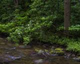 On a Quiet Stream