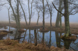 Reflecting on a Foggy Morn