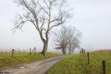 Country Lane on a Foggy Day