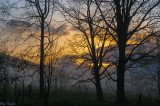 Sunrise Beyond the Trees and Fog