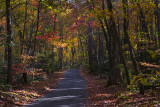 Small Road Up Buckeye Ridge