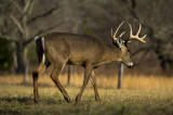 Nearing the End of the Rut