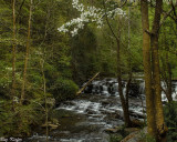 Spring on Cove Creek