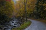 Autumn on a Foggy, Rainy Day