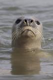 Seals at the Ythan Estuary