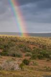 Addo Rainbow
