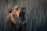 New wildlife photos