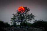 Botswana Moon
