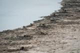 De Hoop Baboons