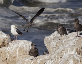 The Birds of Santa Cruz