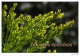 New Undergrowth