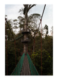 Canopy walkway in the rainforest