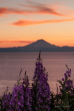 Volcano and Fireweed at Midnight