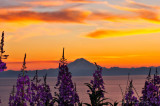 Fireweed, Mount Redoubt, and a Midnight Sunset