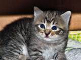 Nikki's Kitten