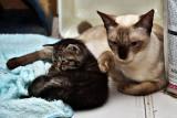 Nikki & Kitten