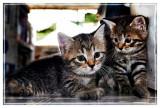Nikki's Kittens