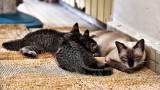 Nikki & Kittens