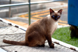 The Cats of Beach Road