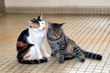 Tama & Ginny