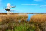 Encanyissada - Encarrizada - Reed bed Lagoon
