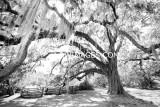 CHARLESTON SOUTH CAROLINA IN BLACK AND WHITE