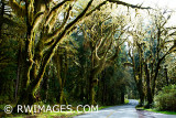 ROAD TO HOH RAINFOREST
