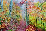 appalachian trail, smoky mountains