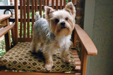 Willie on our Patio