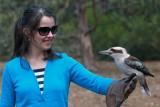 Kookaburra on Kangaroo Island