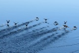 Birds scatter in front of the boat