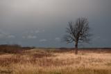 Januari 2014: Trees