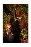 L'art du jardin au Grand PalaisArtiste bossant
