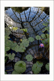 L'art du jardin au Grand PalaisNénuphars